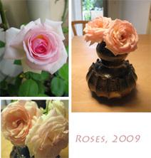 Rose09june