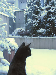 Snowing2011