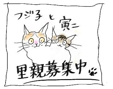 Fujikotoraji