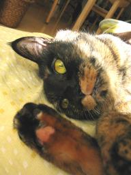Catsunshine2