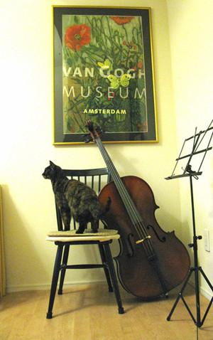 Cellotocat