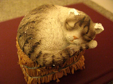 Pcraycat